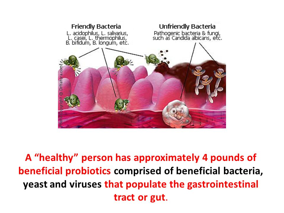 A healthy person has approximately 4 pounds of beneficial probiotics comprised of beneficial bacteria, yeast and viruses that populate the gastrointestinal tract or gut.