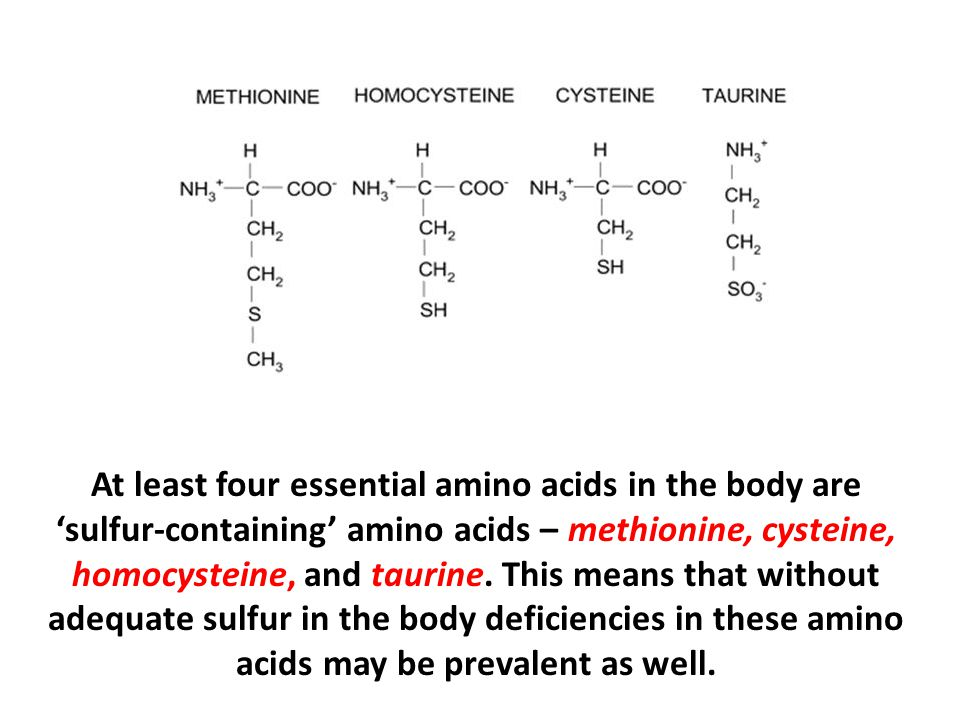 At least four essential amino acids in the body are 'sulfur-containing' amino acids – methionine, cysteine, homocysteine, and taurine.