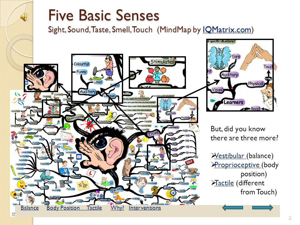 Sensory Integration Gigantic Freeway System How do your senses fit together within your body.
