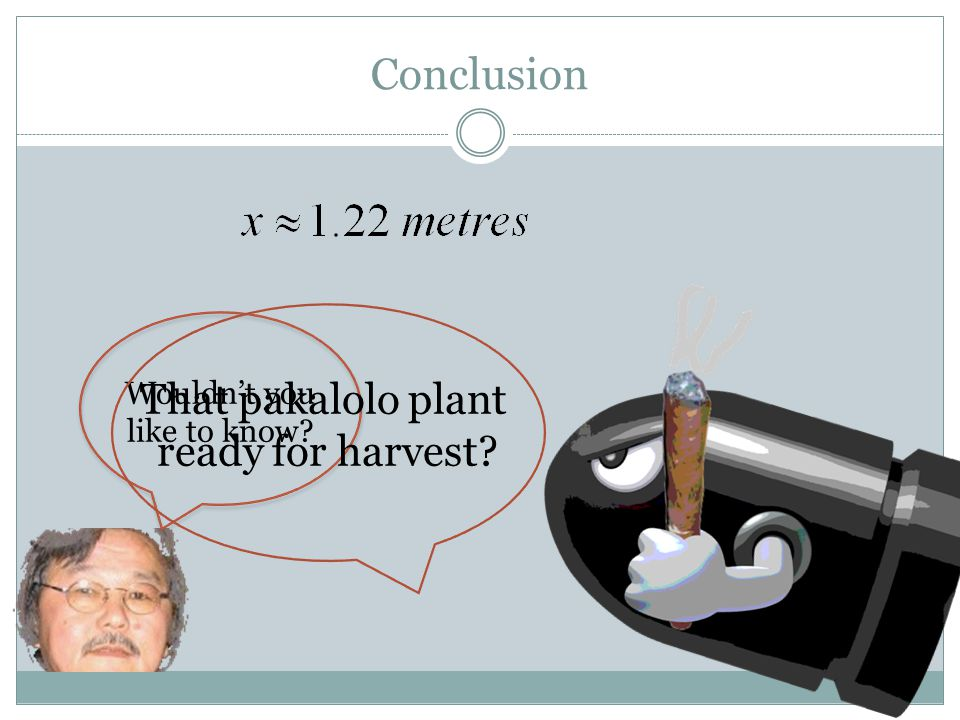 Conclusion Wouldn't you like to know That pakalolo plant ready for harvest