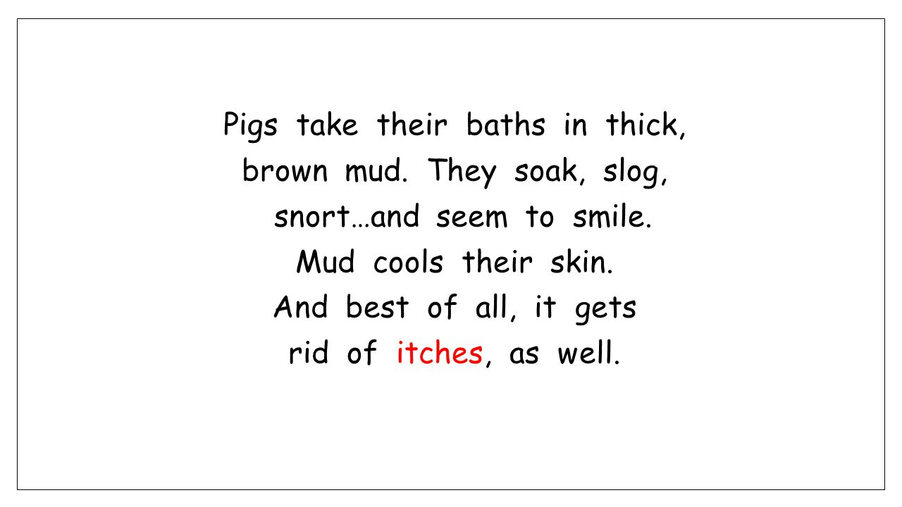Pigs take their baths in thick, brown mud. They soak, slog, snort…and seem to smile.