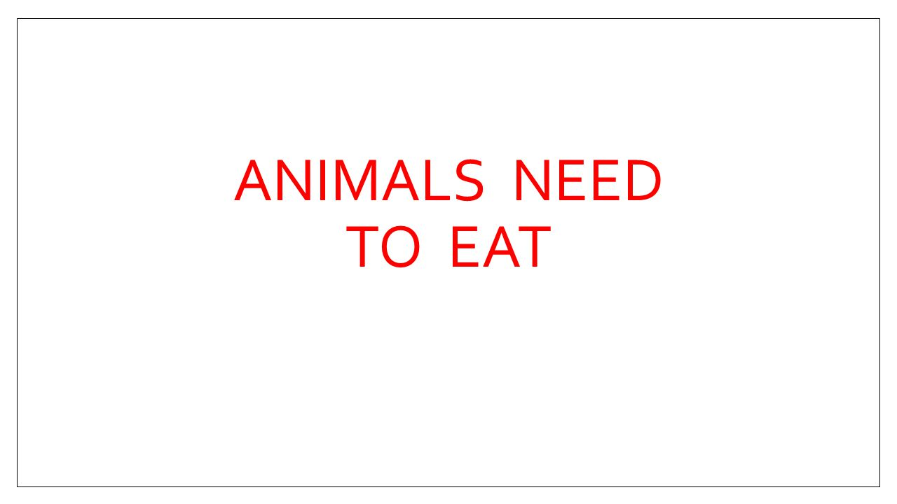 ANIMALS NEED TO EAT