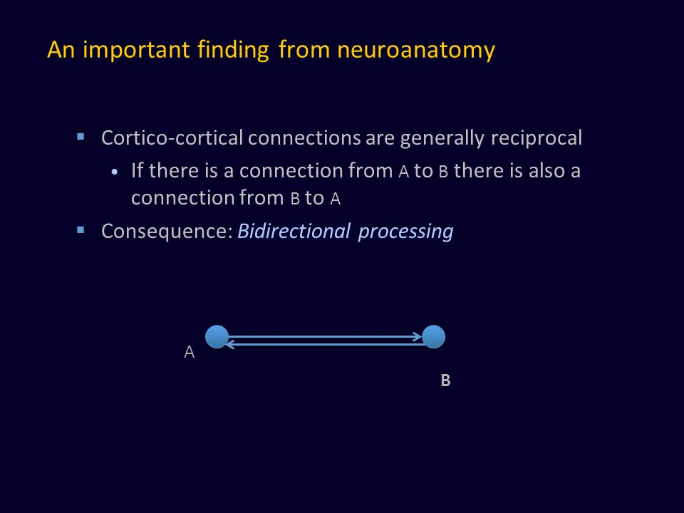 An important finding from neuroanatomy  Cortico-cortical connections are generally reciprocal If there is a connection from A to B there is also a connection from B to A  Consequence: Bidirectional processing A B