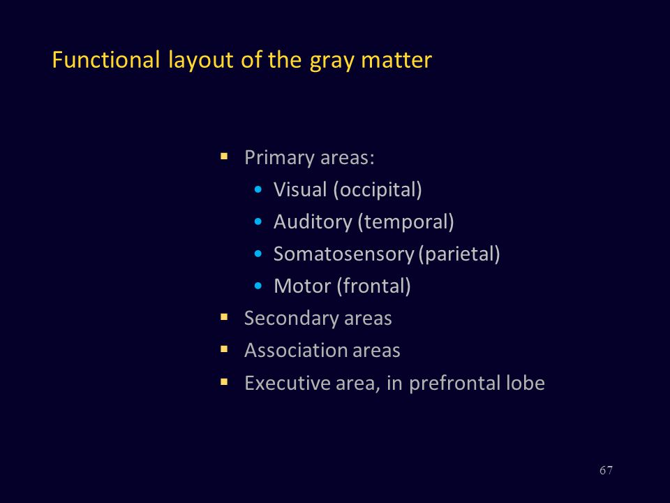 Functional layout of the gray matter  Primary areas: Visual (occipital) Auditory (temporal) Somatosensory (parietal) Motor (frontal)  Secondary areas  Association areas  Executive area, in prefrontal lobe 67
