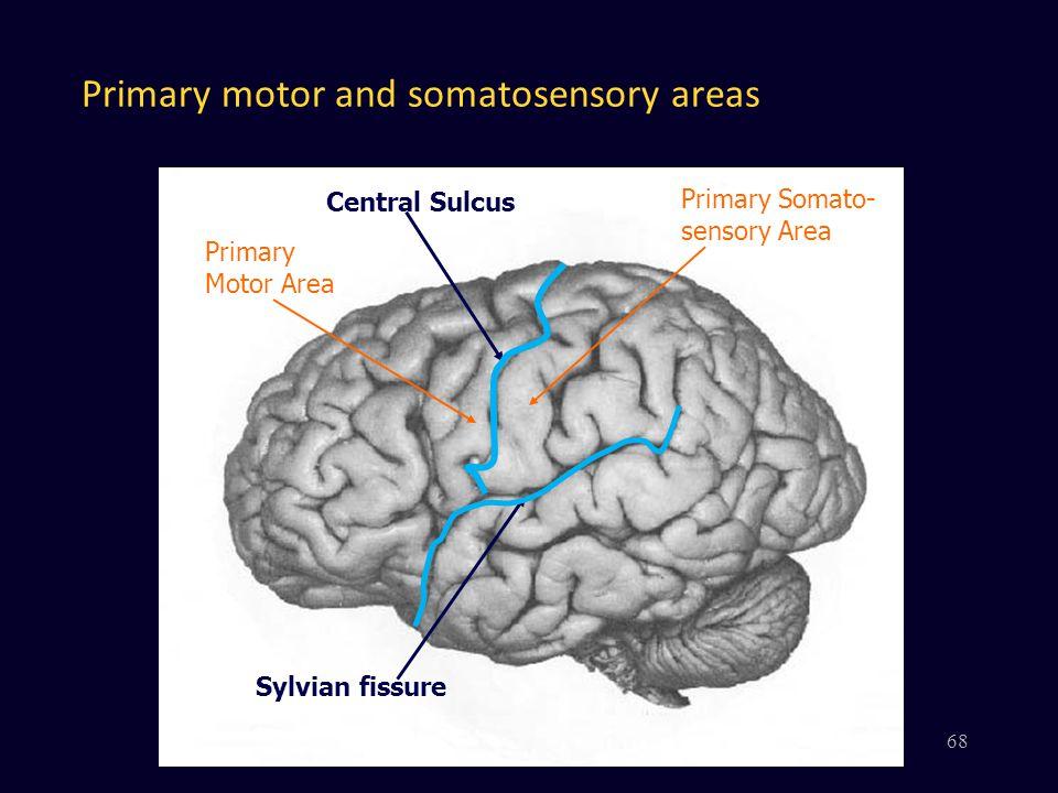 Primary motor and somatosensory areas Central Sulcus Sylvian fissure Primary Motor Area Primary Somato- sensory Area 68