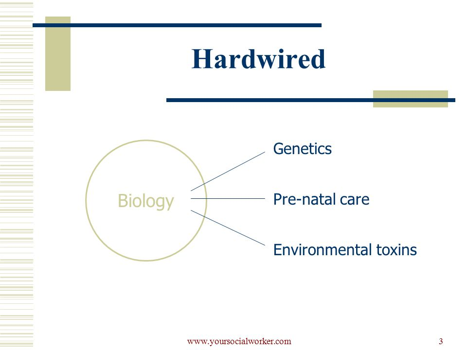 www.yoursocialworker.com3 Hardwired Biology Genetics Pre-natal care Environmental toxins