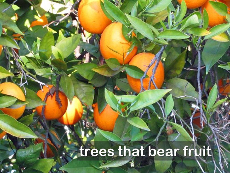 trees that bear fruit