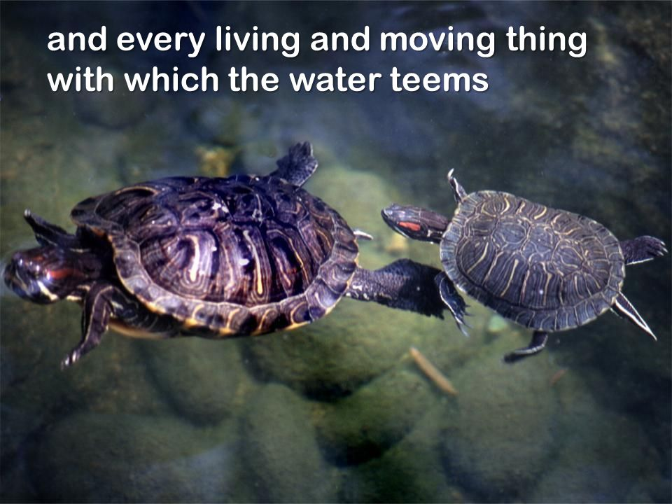 and every living and moving thing with which the water teems
