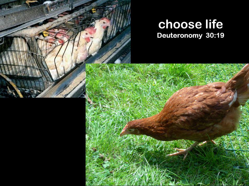 choose life Deuteronomy 30:19