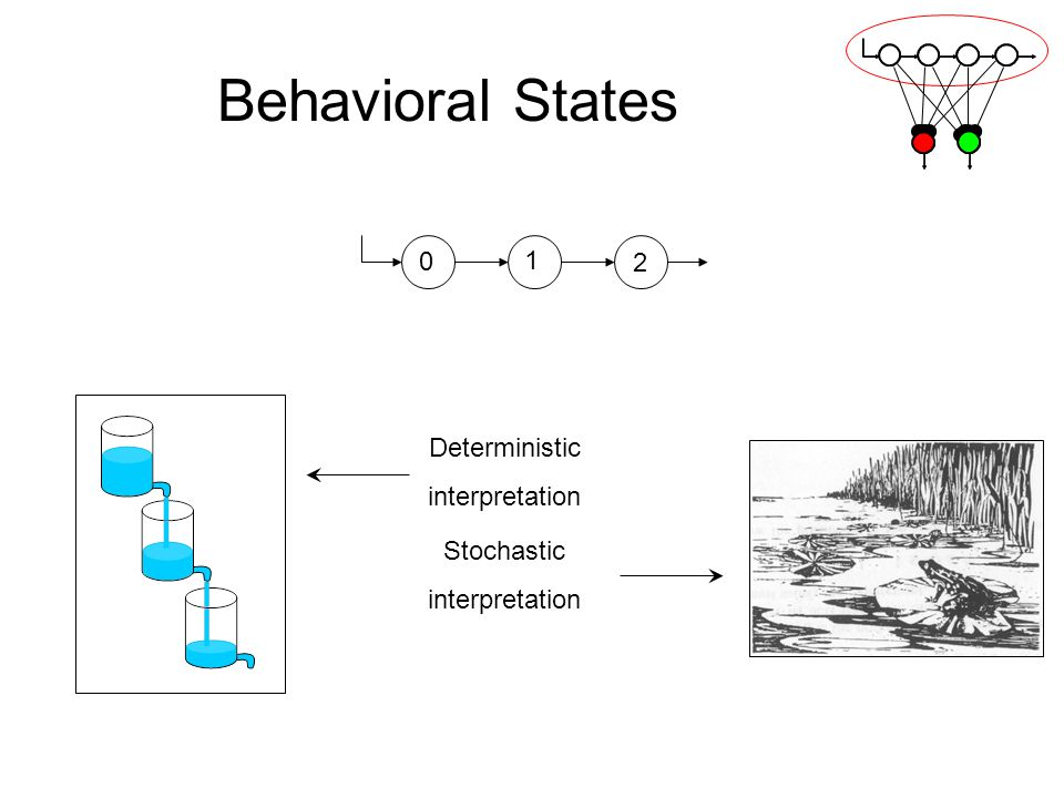 Behavioral States 0 1 2 Deterministic interpretation Stochastic interpretation