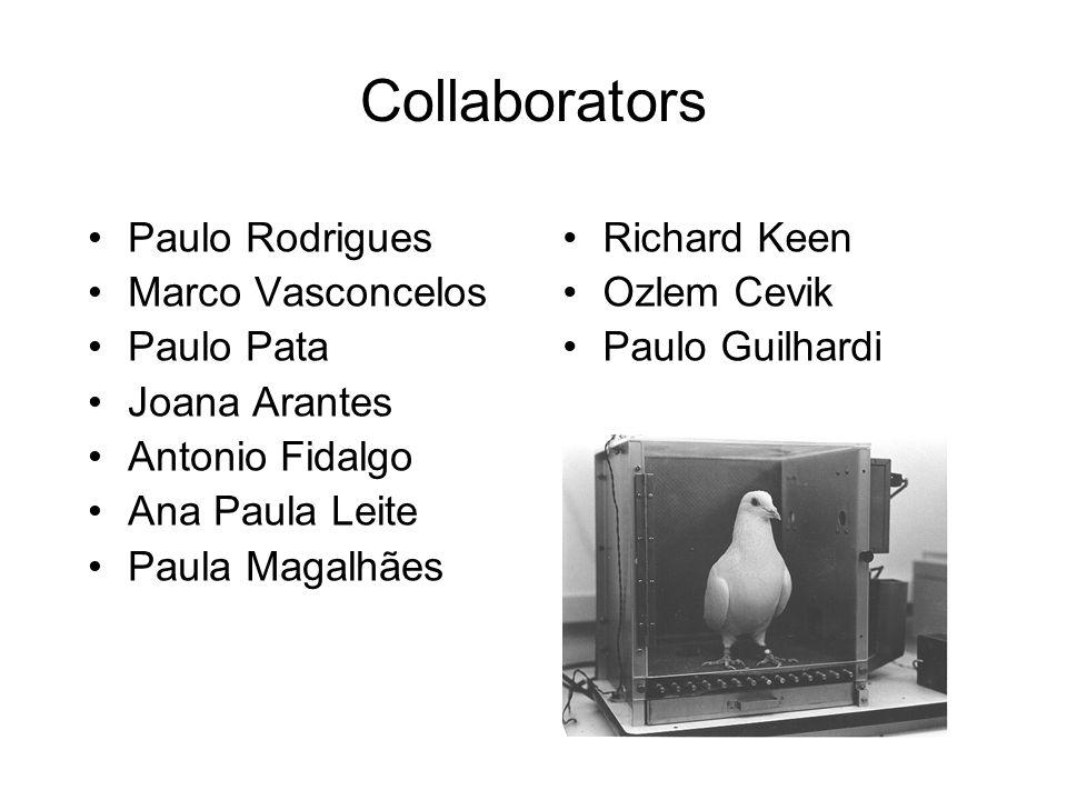 Collaborators Paulo Rodrigues Marco Vasconcelos Paulo Pata Joana Arantes Antonio Fidalgo Ana Paula Leite Paula Magalhães Richard Keen Ozlem Cevik Paul