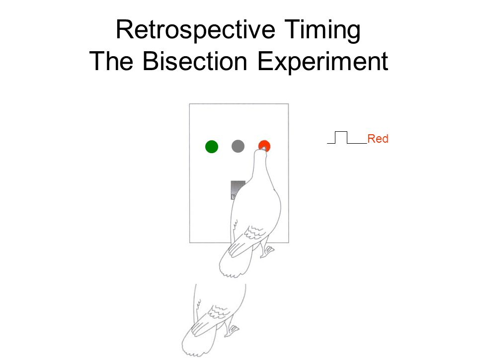 Retrospective Timing The Bisection Experiment Red
