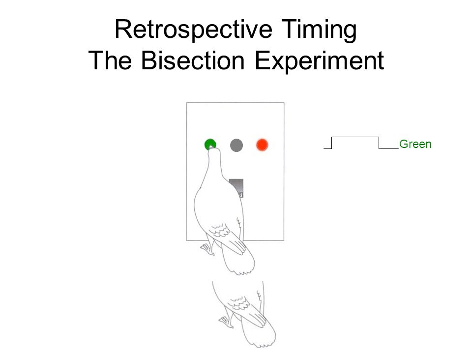 Retrospective Timing The Bisection Experiment Green