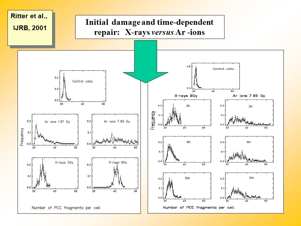 Initial damage and time-dependent repair: X-rays versus Ar -ions Ritter et al., IJRB, 2001 Ritter et al., IJRB, 2001