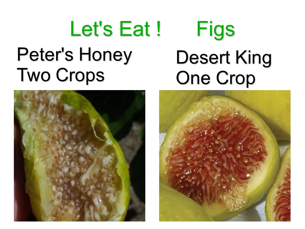 Let s Eat ! Figs Peter s Honey Two Crops Desert King One Crop