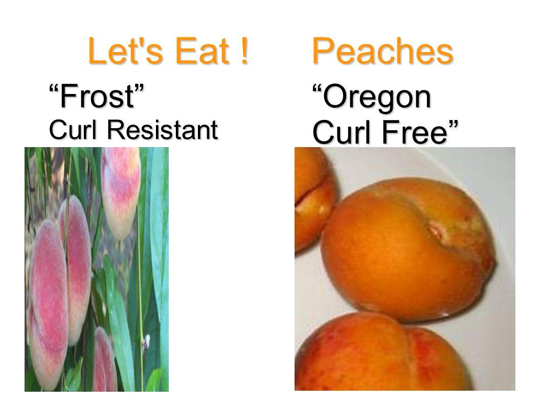 "Let's Eat ! Peaches ""Frost"" Curl Resistant ""Oregon Curl Free"""