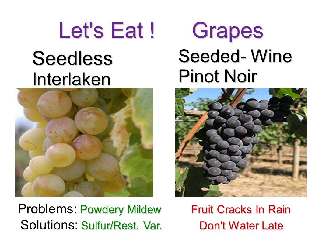 Let's Eat ! Grapes SeedlessInterlaken Seeded- Wine Pinot Noir Powdery MildewFruit Cracks In Rain Problems: Powdery Mildew Fruit Cracks In Rain Sulfur/
