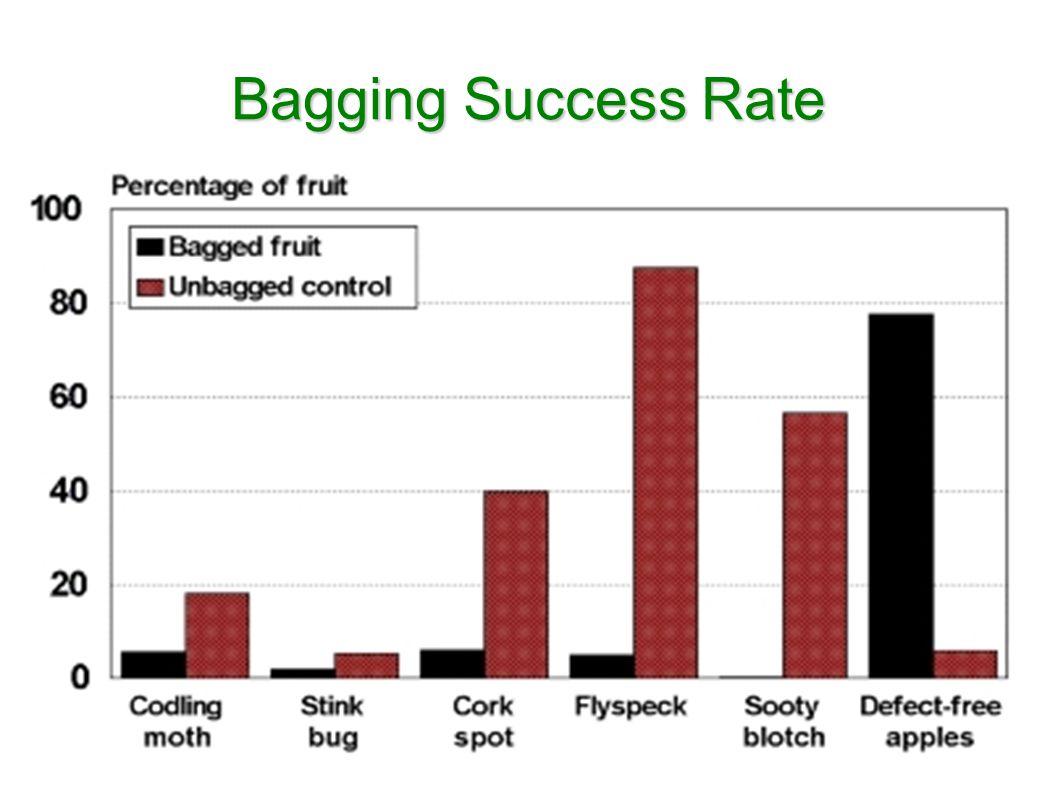 Bagging Success Rate