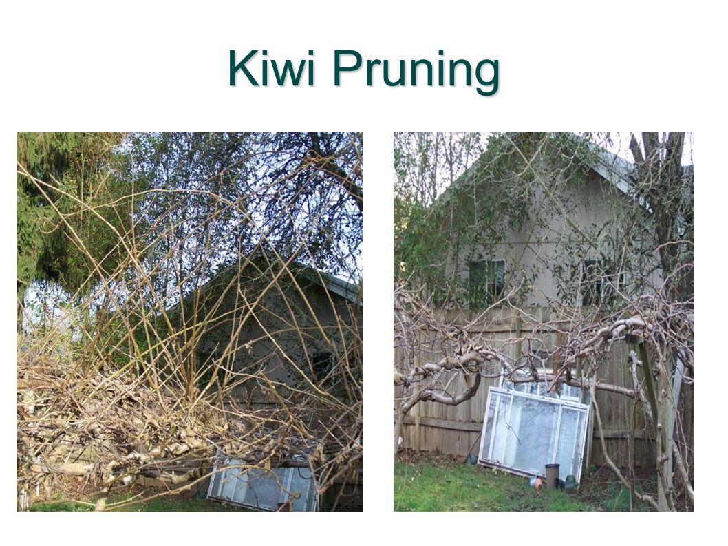 Kiwi Pruning