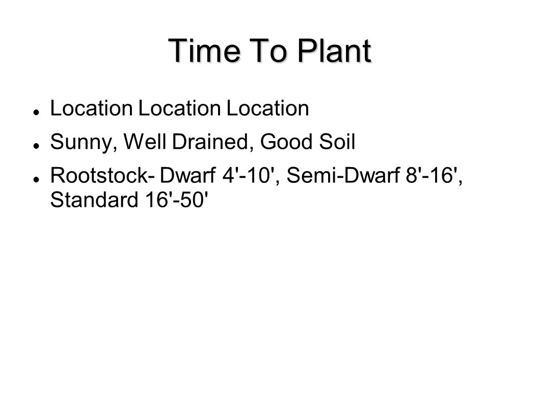Time To Plant Location Location Location Sunny, Well Drained, Good Soil Rootstock- Dwarf 4 -10 , Semi-Dwarf 8 -16 , Standard 16 -50