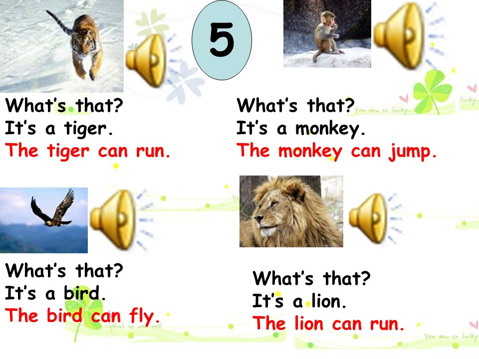 What's that? It's a tiger. The tiger can run. What's that? It's a lion. The lion can run. What's that? It's a monkey. The monkey can jump. What's that