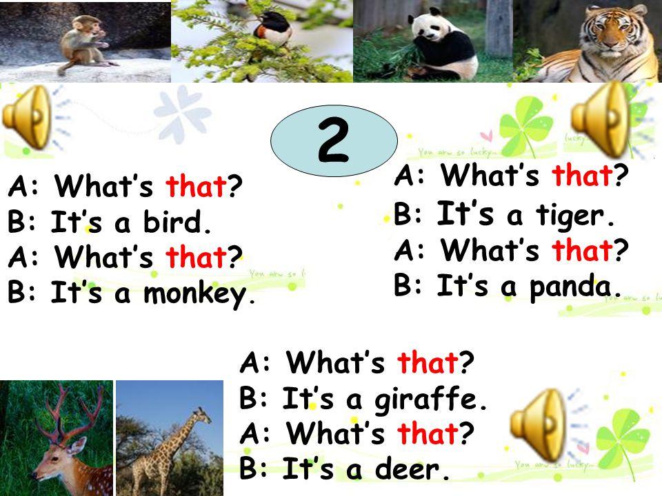 A: What's that? B: It's a bird. A: What's that? B: It's a monkey. A: What's that? B: It's a tiger. A: What's that? B: It's a panda. 2 A: What's that?