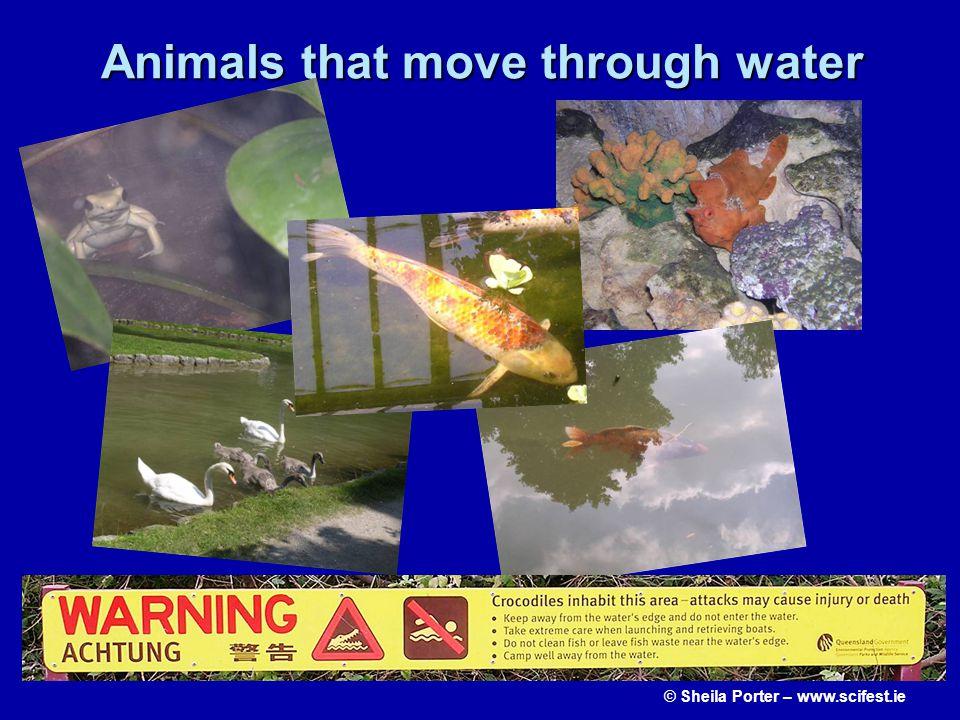 Animals that move through water © Sheila Porter – www.scifest.ie