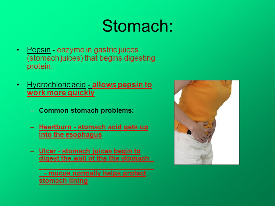 Stomach: Pepsin - enzyme in gastric juices (stomach juices) that begins digesting protein.