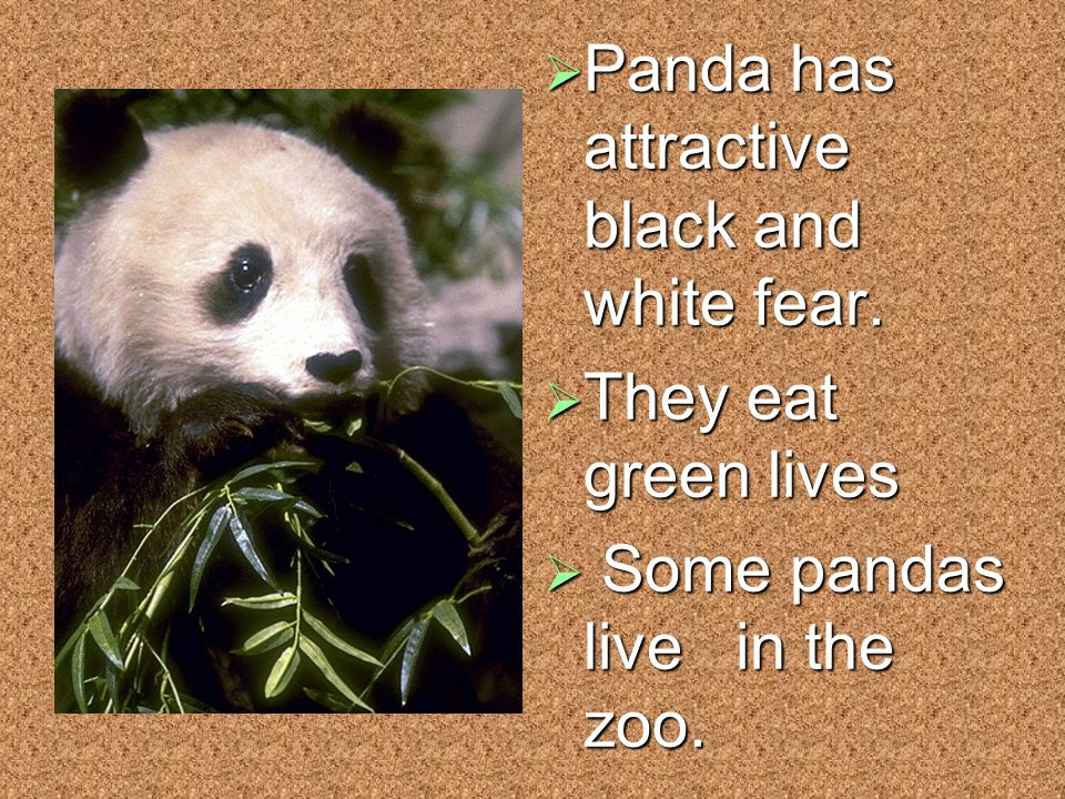  Panda has attractive black and white fear.  They eat green lives  Some pandas live in the zoo.