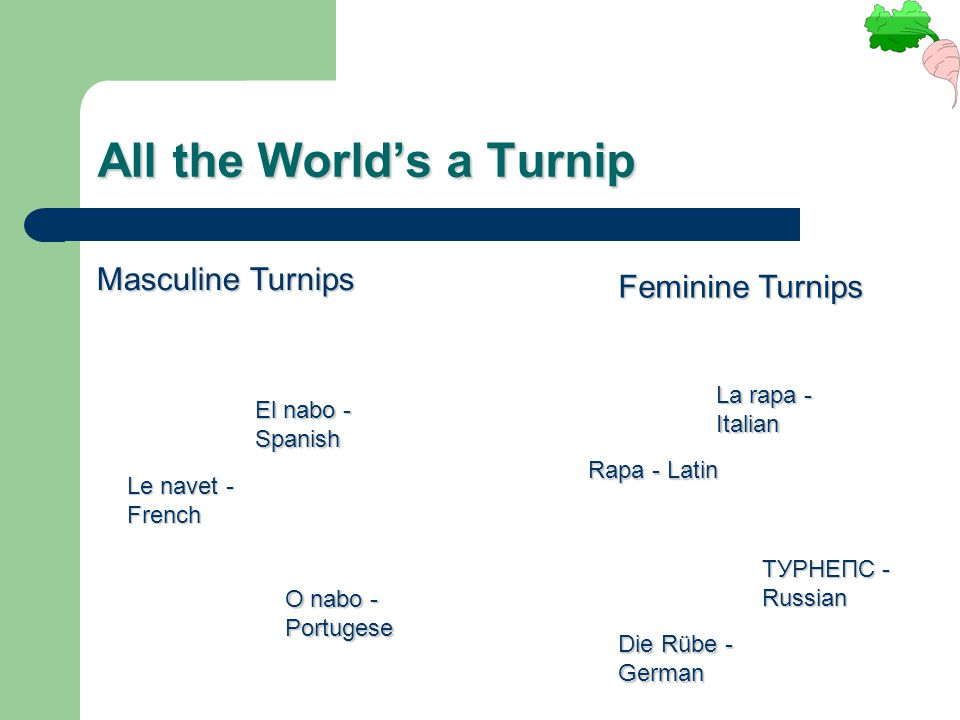 All the World's a Turnip Masculine Turnips Feminine Turnips Le navet - French El nabo - Spanish O nabo - Portugese Die Rübe - German La rapa - Italian