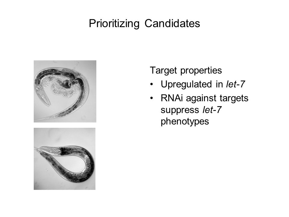 Target properties Upregulated in let-7 RNAi against targets suppress let-7 phenotypes Prioritizing Candidates