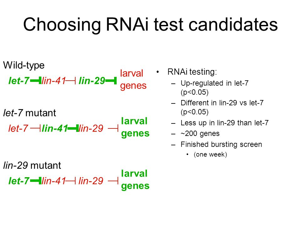 RNAi testing: –Up-regulated in let-7 (p<0.05) –Different in lin-29 vs let-7 (p<0.05) –Less up in lin-29 than let-7 –~200 genes –Finished bursting scre