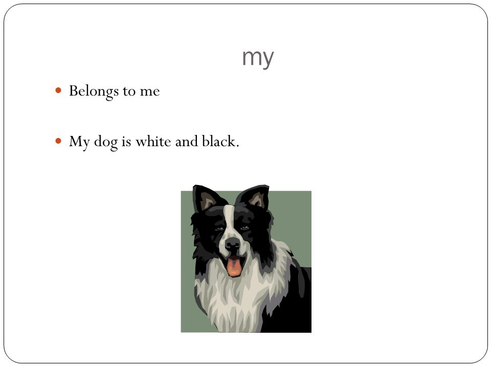 my Belongs to me My dog is white and black.