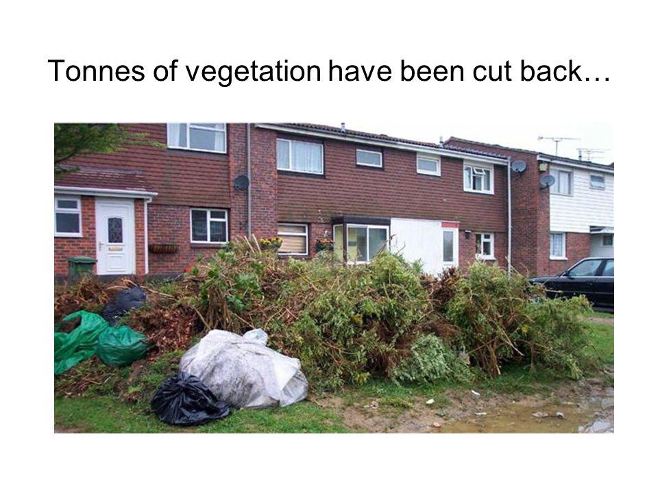 Tonnes of vegetation have been cut back…