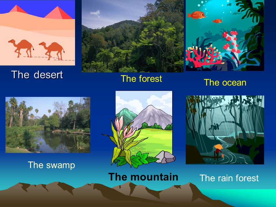 The desert The mountain The forest The ocean The swamp The rain forest