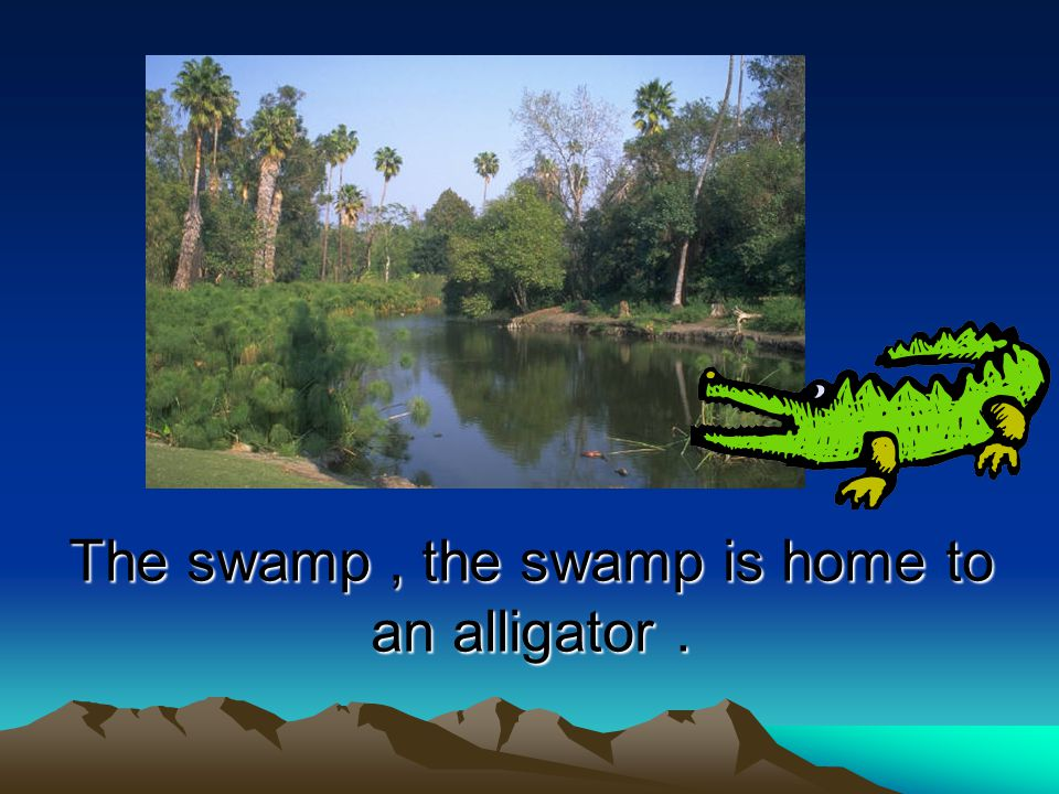 The swamp, the swamp is home to an alligator.