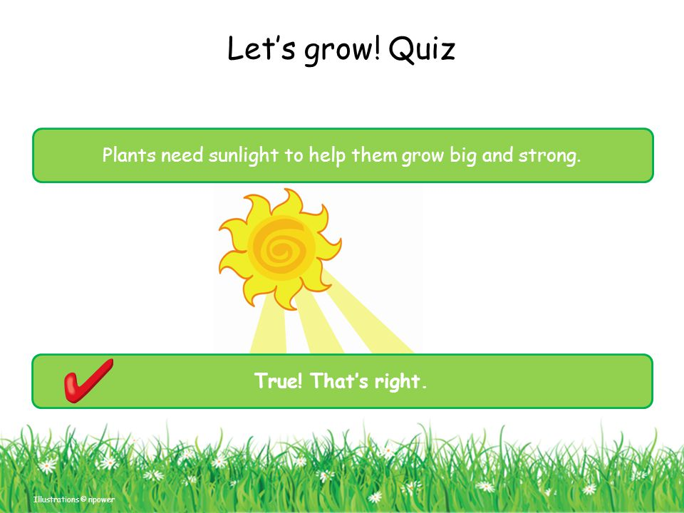 Let's grow! Quiz Illustrations © npower Plants need sunlight to help them grow big and strong. True! That's right.