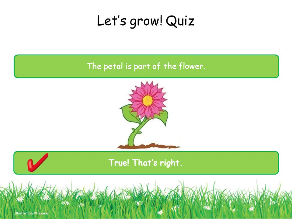 Let's grow! Quiz The petal is part of the flower. Illustrations © npower True! That's right.