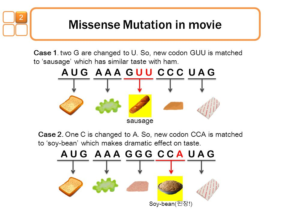 Missense Mutation in movie Case 1. two G are changed to U. So, new codon GUU is matched to 'sausage' which has similar taste with ham. Case 2. One C i