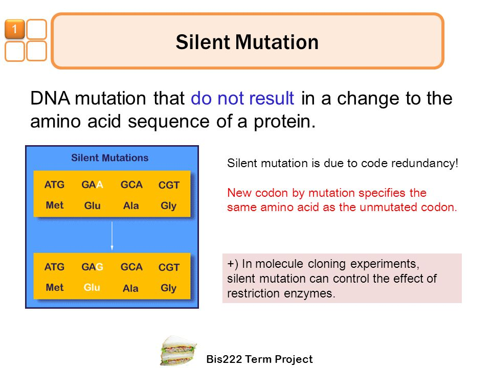 Bis222 Term Project 1 Silent Mutation DNA mutation that do not result in a change to the amino acid sequence of a protein. Silent mutation is due to c