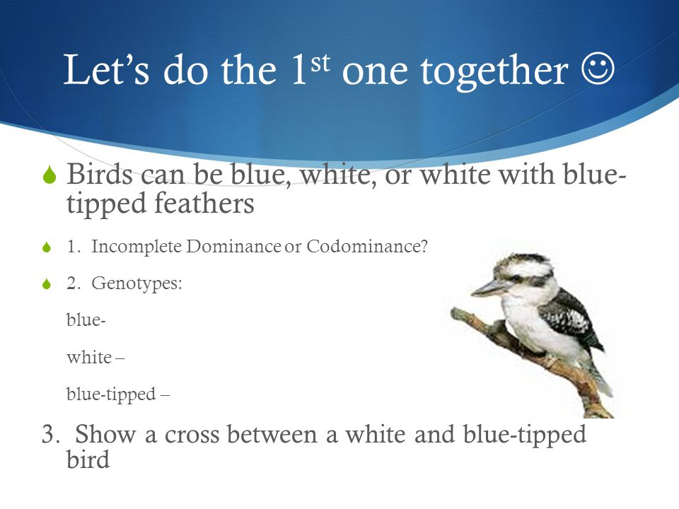Let's do the 1 st one together  Birds can be blue, white, or white with blue- tipped feathers  1. Incomplete Dominance or Codominance?  2. Genotype