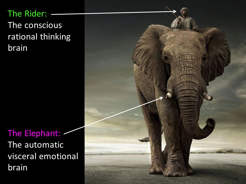 The Rider: The conscious rational thinking brain The Elephant: The automatic visceral emotional brain