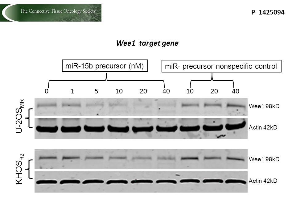 Wee1 98kD 0 1 5 10 20 40 miR-15b precursor (nM) U-2OS MR 10 20 40 miR- precursor nonspecific control Actin 42kD Wee1 98kD Actin 42kD KHOS R2 P 1425094 Wee1 target gene