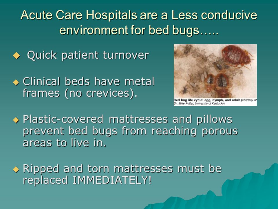 Acute Care Hospitals are a Less conducive environment for bed bugs…..
