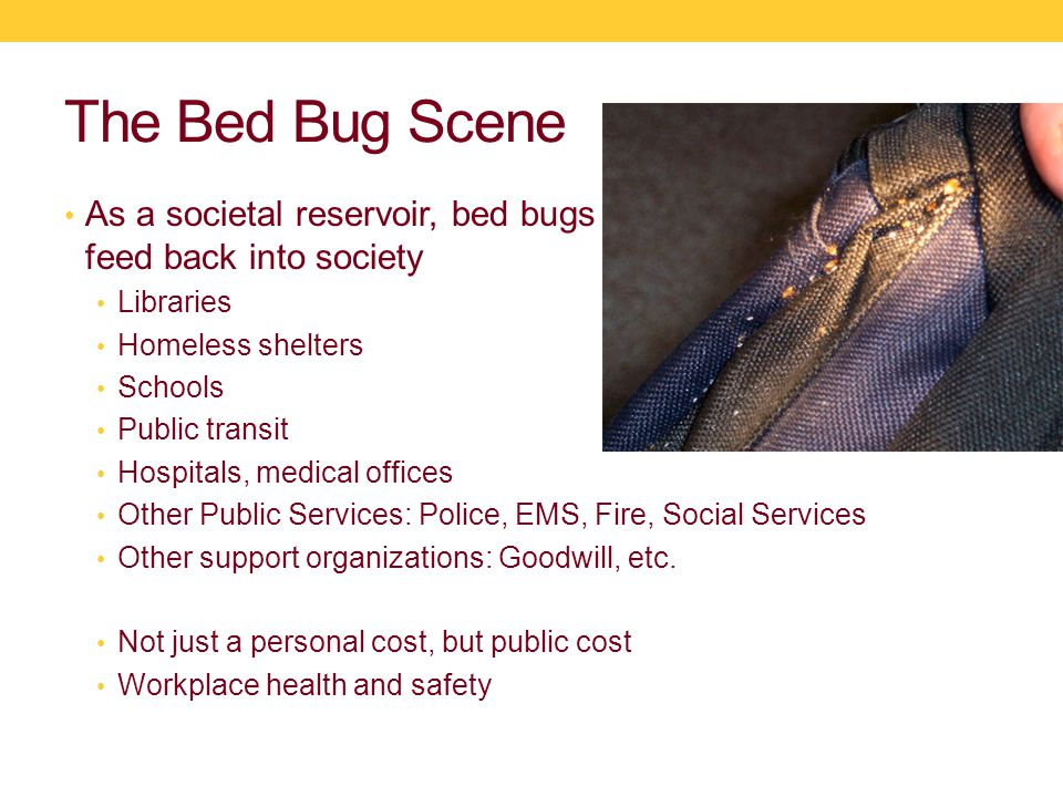 The Bed Bug Scene As a societal reservoir, bed bugs have the opportunity to feed back into society Libraries Homeless shelters Schools Public transit Hospitals, medical offices Other Public Services: Police, EMS, Fire, Social Services Other support organizations: Goodwill, etc.