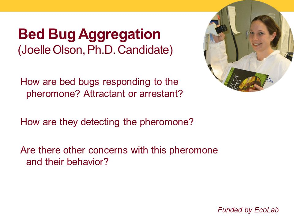 Bed Bug Aggregation (Joelle Olson, Ph.D. Candidate) How are bed bugs responding to the pheromone.