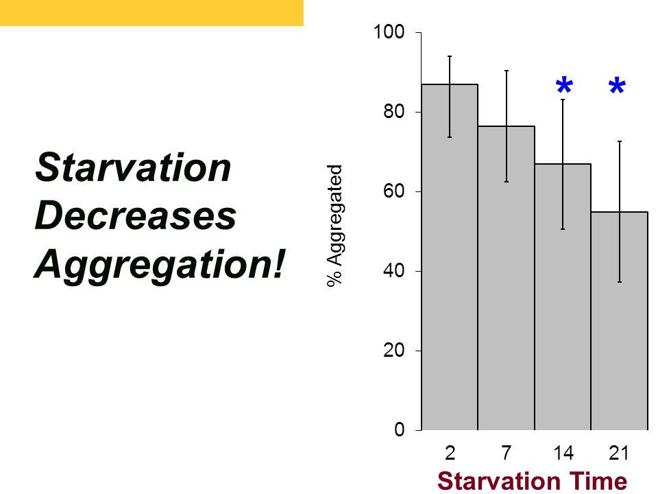 Starvation Decreases Aggregation! Starvation Time * *