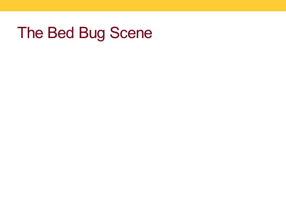 Bed Bug Aggregation (Joelle Olson, Ph.D.Candidate) How are bed bugs responding to the pheromone.