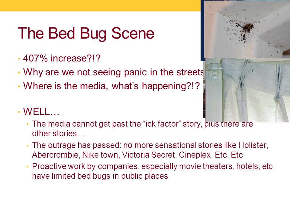 The Bed Bug Scene 407% increase !. Why are we not seeing panic in the streets !.