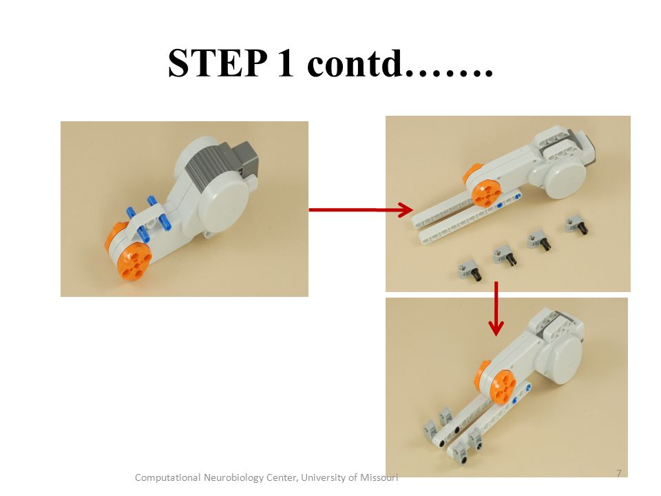 STEP 1 contd……. Computational Neurobiology Center, University of Missouri 7